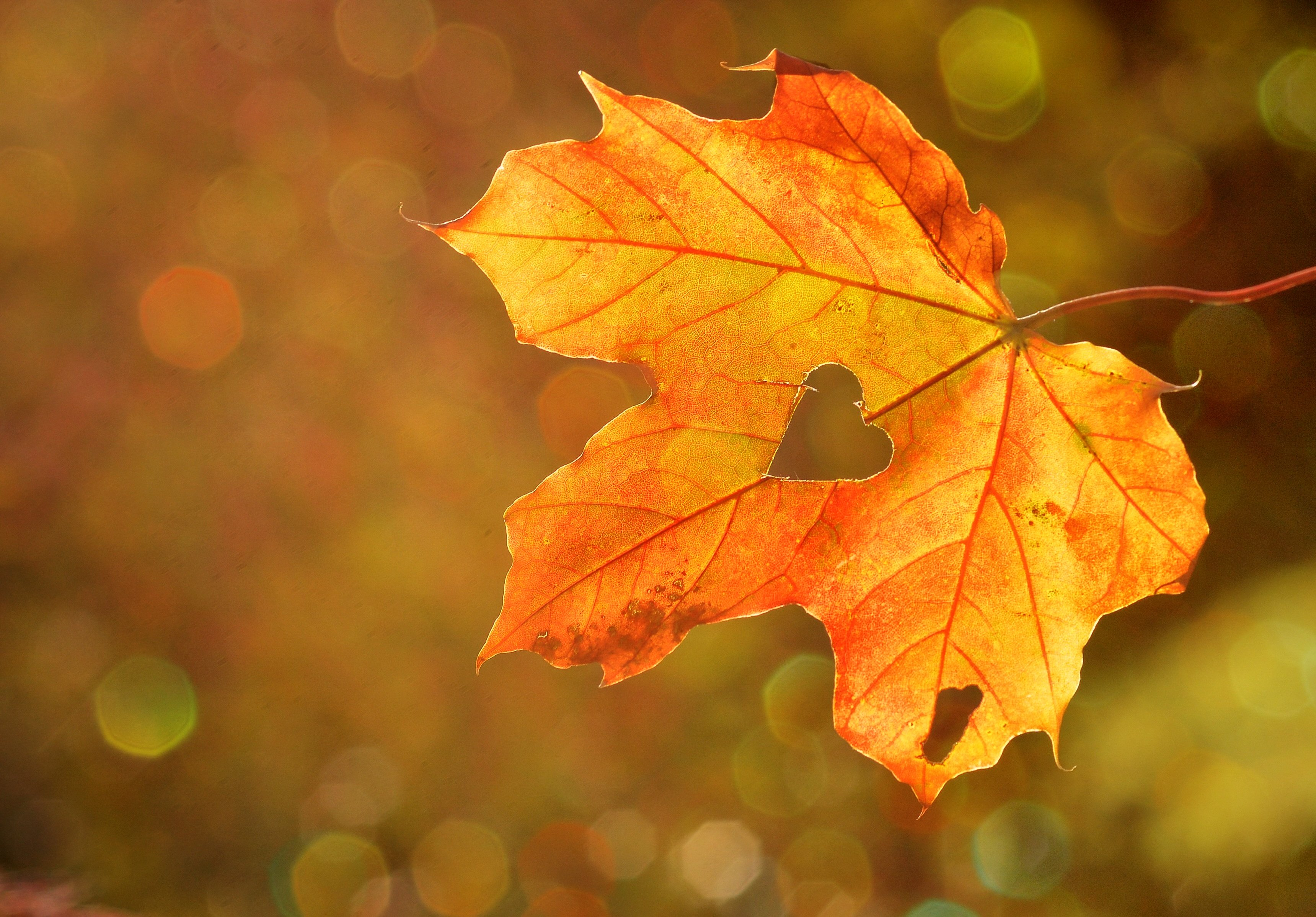 automne-feuille-morte-saison